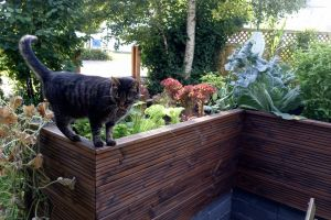 wood bright cat vegetables plants