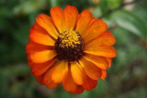 yellow flower beautiful orange flower