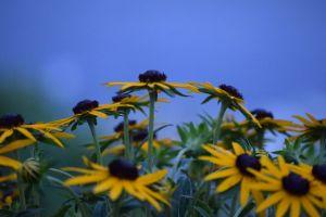 yellow flowers daytime