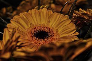 yellow flowers flower yellow