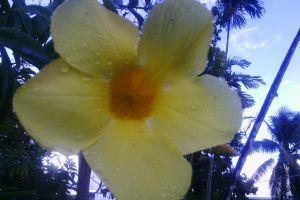 yellow pretty flower