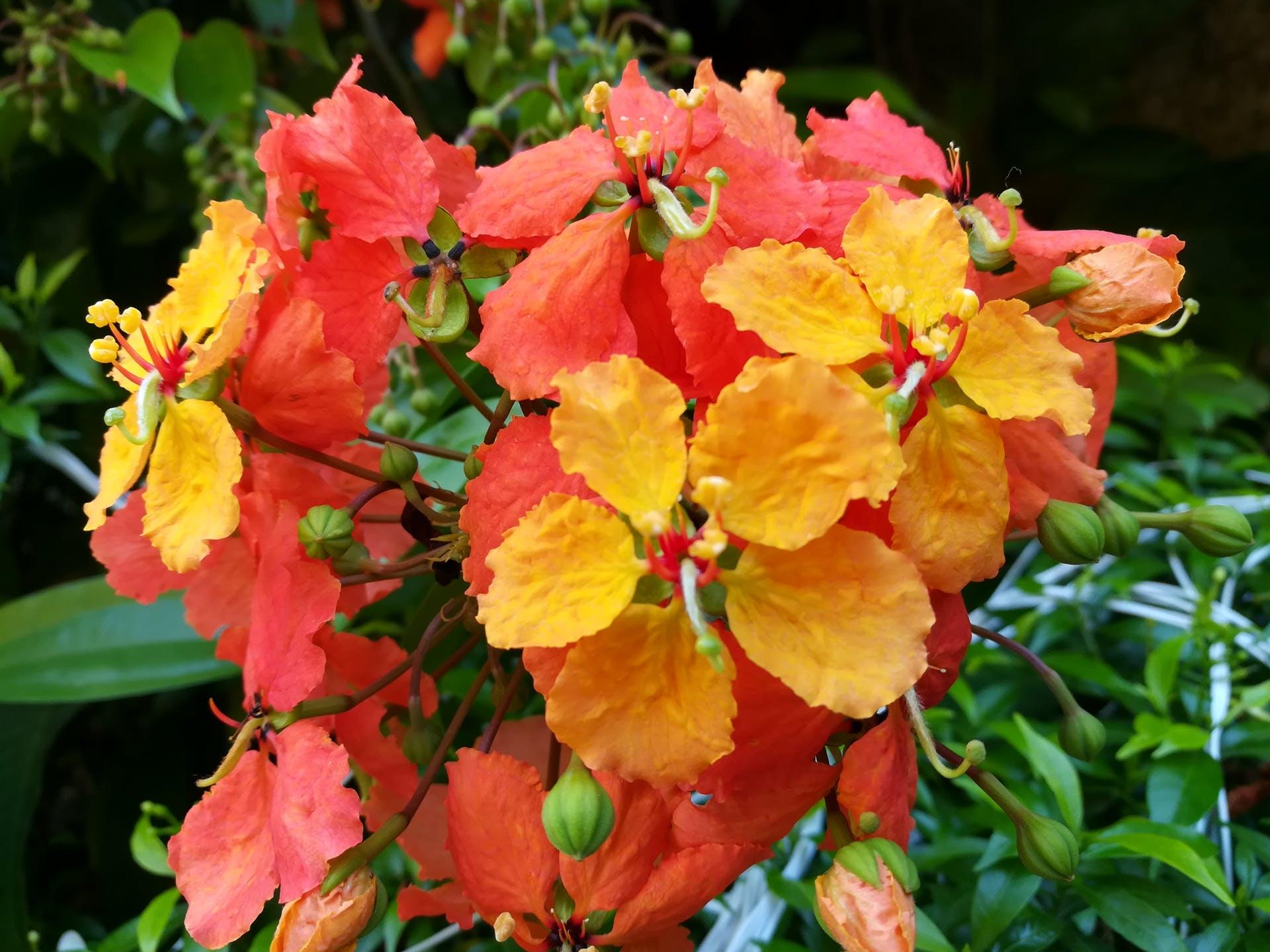 flower flowers beautiful flower