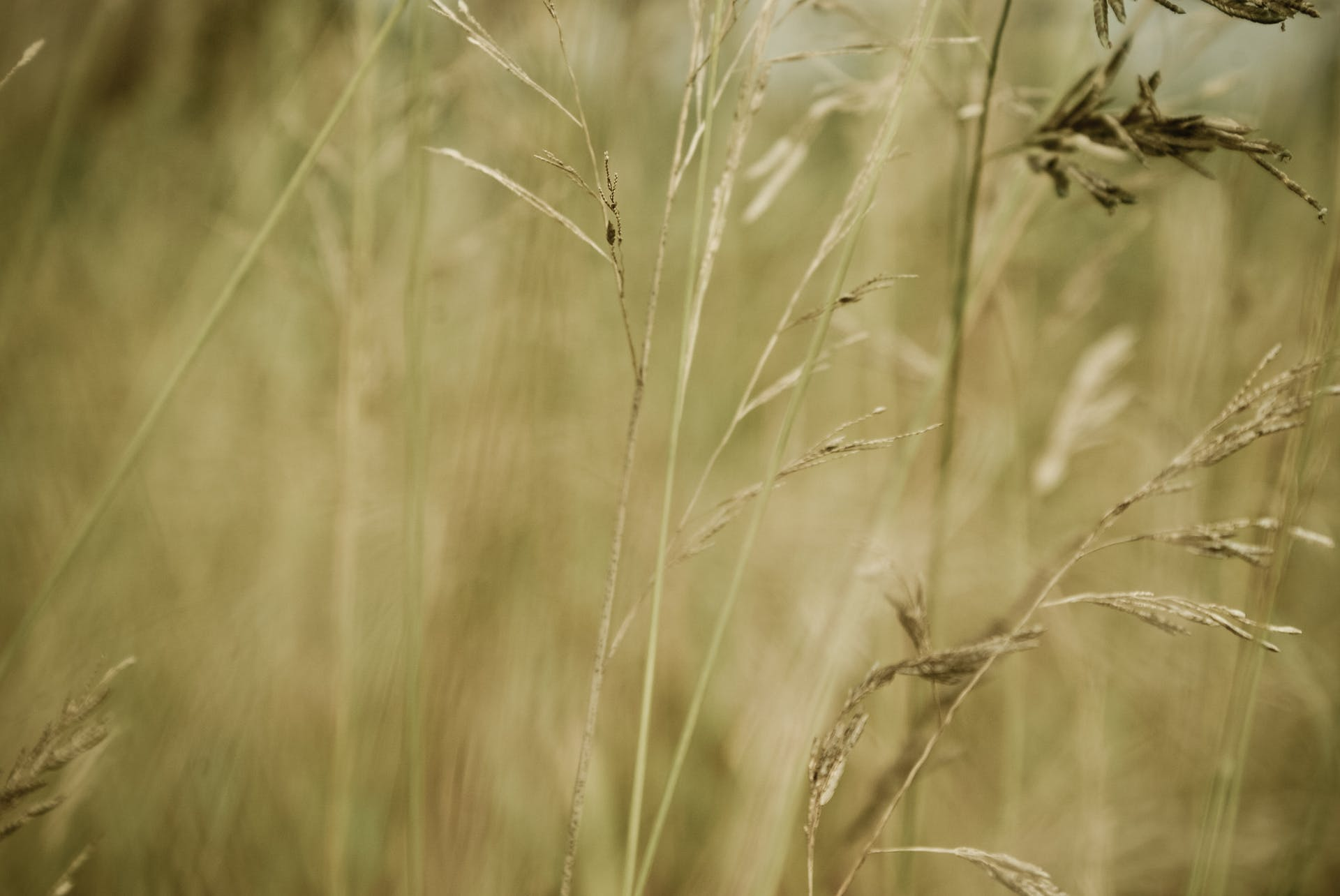 nature macro photo background field blur brown grass bulb focus