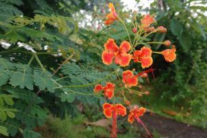4k wallpaper beauty in nature beautiful flowers orange flower