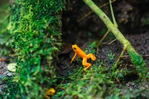 amphibian nature beautiful animal photography frog environment