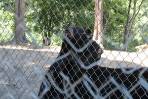 animal zoo bear smiling fence close up