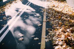 asphalt sunlight maple leaves lane pavement empty landscape guidance fall foliage road