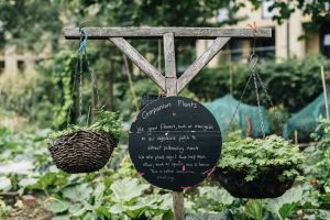 baskets sign crops grow gardening corn blurred background freshness signage daylight