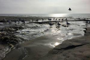 beach northern sea sand seagulls by the sea sun sea