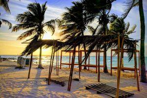 beach sunset coconut trees palms
