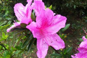 beautiful flower flower flowers