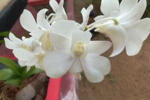 beautiful flower flowers flower