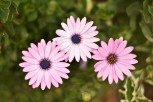 beautiful flower nature purple flowers flowers green