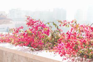 beautiful flowers mountain flowers beautiful city