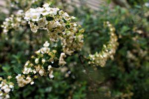 beautiful nature spiral nature flower bush flowers