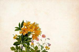 border petal hand made retro background fashion bouquet art design plant