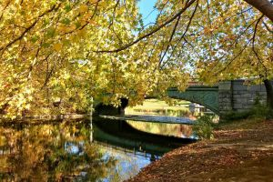 bridge prospect park brooklyn fall foliage