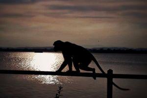 brown sky beautiful sunset polonnaruwa sri lanka monkey