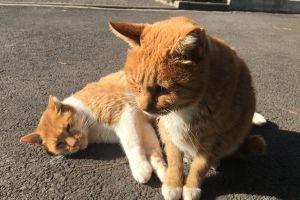 cat cats kitten animal