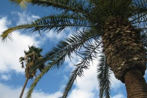 city blue skies palm trees