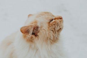 close-up fur eye tabby kitten downy adorable pet cat curiosity