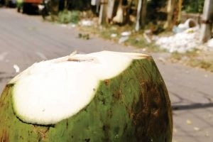 coconuts coconut trees hot hot synnu day summer drink summer day coconut tree thunder coconut coconut coconutwater