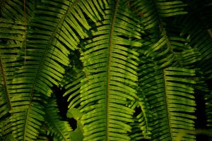 color frond botany garden branch close-up tropical green foliage botanical