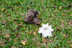 color vegetarian beauty food raw flora organic bignoniaceae bloom fallen