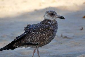 curlew sea tern ale seagull snipe