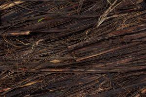 dead plants plants wood