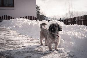 dog snow pet winter outdoor