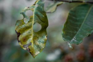 dried leaf garden green leaf plant