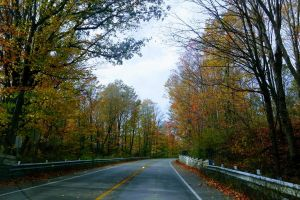fall leaves road country road empty road road trip fall colors curvy road