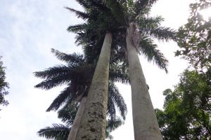 fan palm greenery green leaves bloom forest