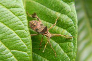 fauna nature life plant brasil green bedbug life flora bug insect