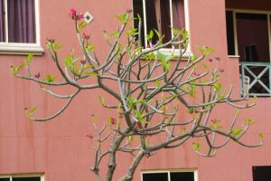 few leaves life residential building tree young tree nature