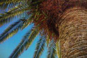 florida tropical warm weather palm tree blue skies sunny days palms green