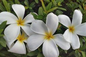 flower flowers white
