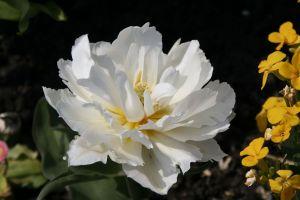 flowering flowers flower white flower