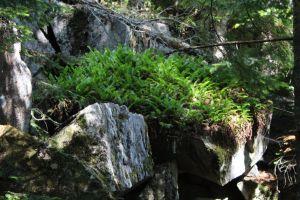 forest ferns contrast close up rocks moss
