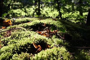 forest nature moss