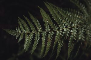 freshness fern leaves pattern growth close-up frond fresh color green green fern