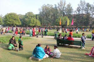 garden chandigarh garden festival tarrace garden flower festival
