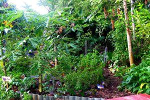 garden tropical foliage