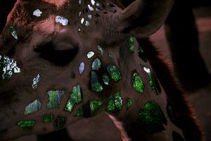 giraffe forest adobe photoshop wild animal