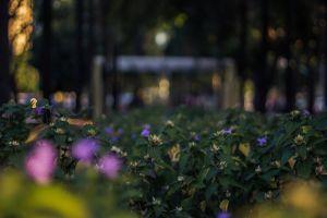 goiânia flora avenida goiás historic flowers brasil centro city garden urban