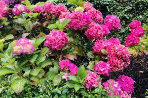 green flowers flower plants nature bloom pink flowers