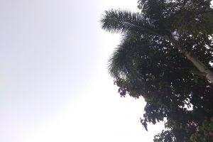 green tree blue sky clear sky palm tree sky