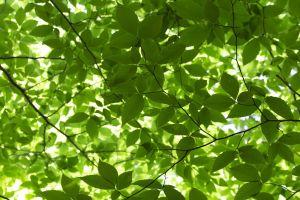 green trees foliage summer nature