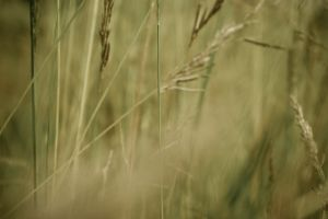 ground nature macro grass focus field photo background